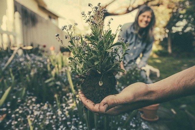 Výsadba rostlin do záhonů